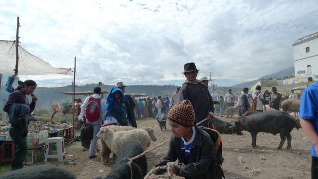 Animal Market, Otavalo