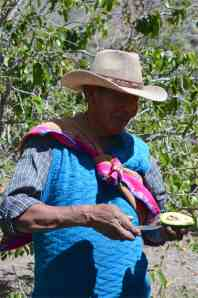 Mauricio sharing with us one of five types of avocados.