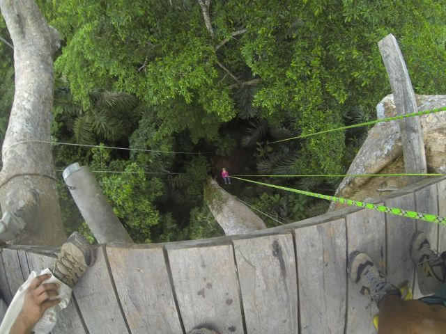 Lucia rappelling down through the canopy - she's the pink dot in the middle