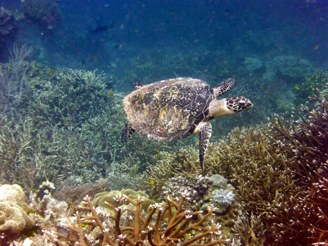 One of several turtles we saw snorkeling
